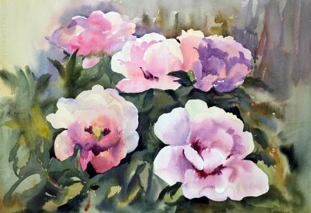 pfingstrosen: Aquarellmalerei der schönen Blumen Lizenzfreie Bilder
