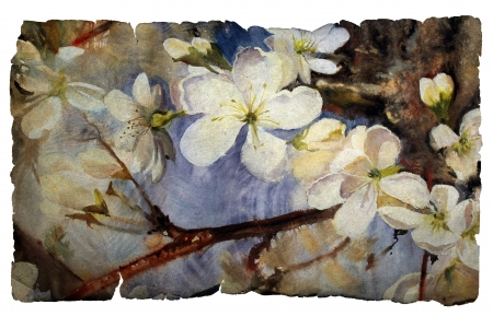 japanese garden: Watercolor painting of the blooming spring tree on vintage paper isolated on white