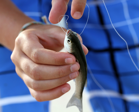 Little fish caught on hook in the arms Stock Photo - 23070968