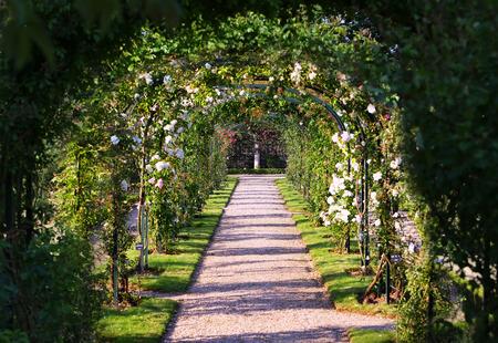 Rose Arch In de Tuin Stockfoto
