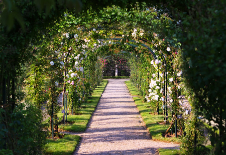 natural arch: Rose Arch In the Garden