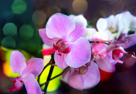 harmonous: Bouquet of magenta orchids on color background.