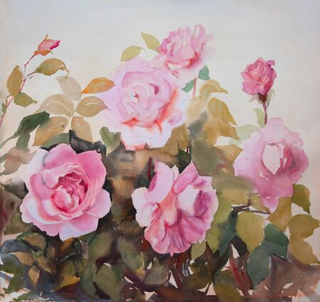 peonies: Watercolor painting of the beautiful roses in the garden.