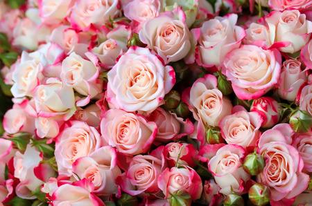 Arrière-plan de roses Banque d'images - 69530019