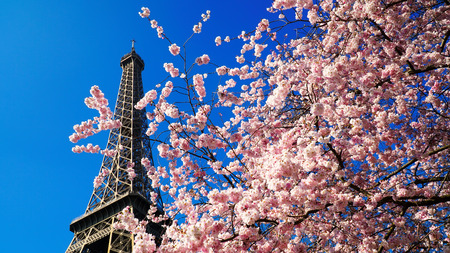 Sun flower: Eiffel Tower in spring time, Paris, France