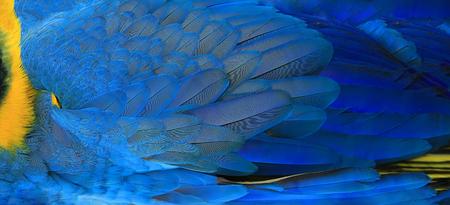 Papageien Federn gelb und blau exotische Textur