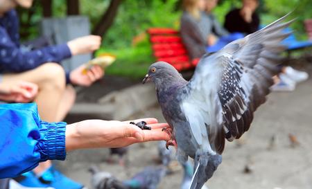 The girl feeds pigeons in the park Lizenzfreie Bilder