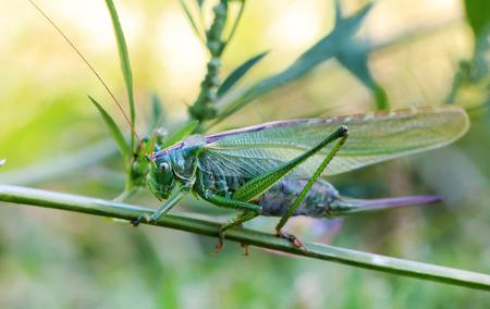 Grasshopper macro shot Lizenzfreie Bilder