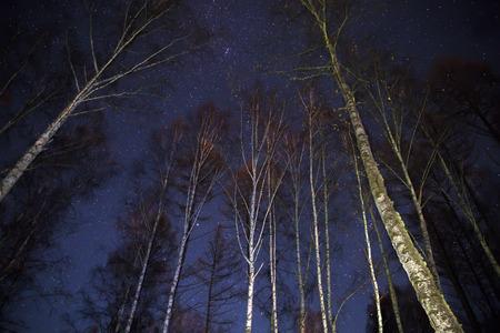 Night sky over trees background Standard-Bild