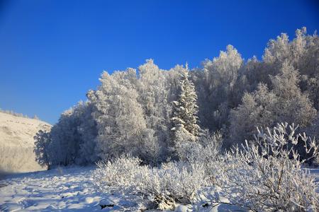 Winter landscape with snow trees. Standard-Bild