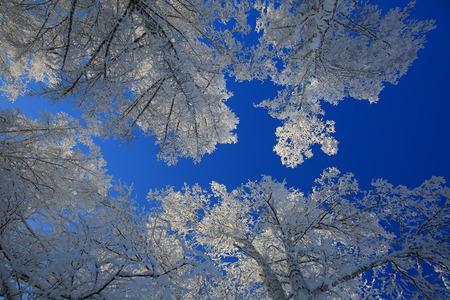 Weiße Bäume des Winters auf Hintergrund des blauen Himmels