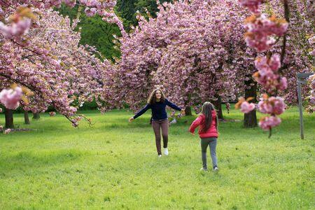 Girls have fun in the park of blooming sakura