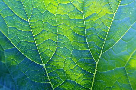 Beautiful natural background of the green leaf