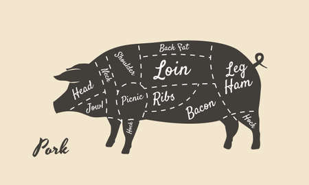 Meat diagram. Cuts of meat. Pig silhouette isolated on white background. Vintage poster for butcher shop, restaurant menu. Vector illustration
