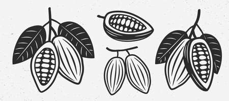 Cocoa beans icons. Vintage cocoa beans set.