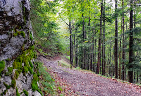 Forest trail in the fog in the mountains, Slovakia Tatras. High quality photo