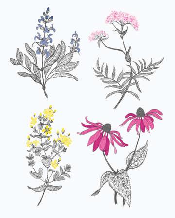 salvia: Herbs set