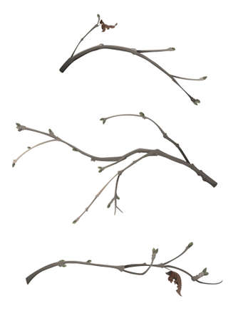 Winter branches set