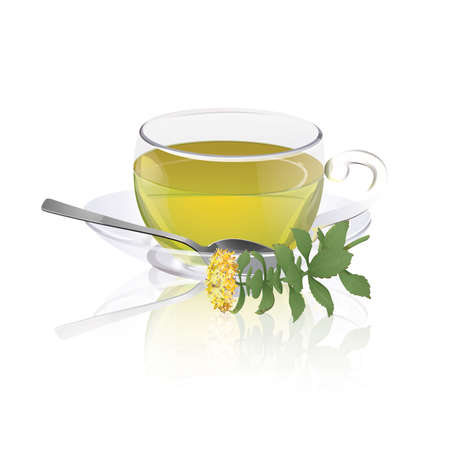 Cup of herbal tea with branch of rhodiola (Rhodiola rosea) Illustration
