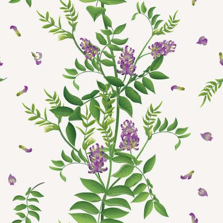 Liquorice (Glycyrrhiza glabra) seamless background
