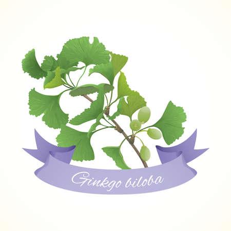 Gingko biloba branch Illustration