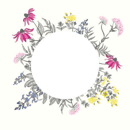 salvia: Card with four kinds of herbs: echinacea, st. john
