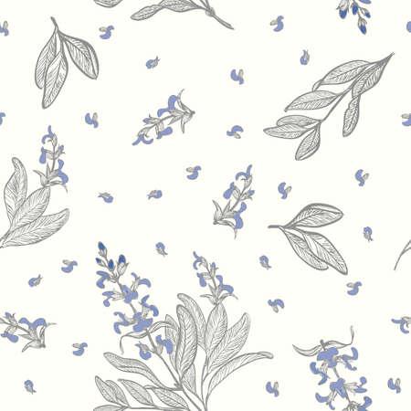 salvia: Sage (Salvia officinalis) seamless background