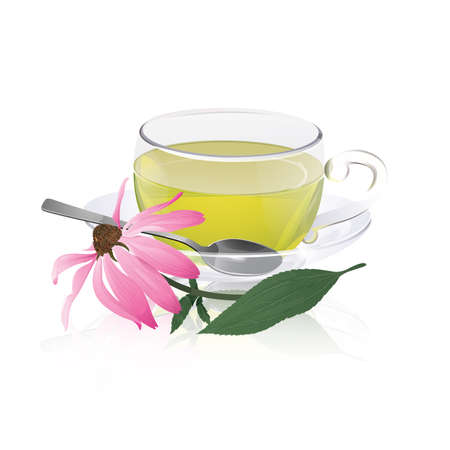 Transparent cup of tea with echinacea flower