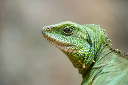 Close up Chinease water dragon with eye look up