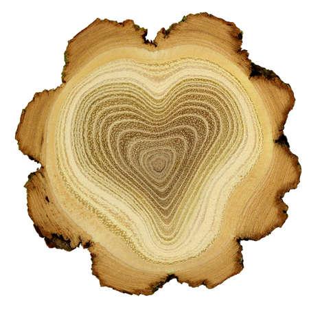 arbol de la vida: Coraz�n de �rbol - los anillos de crecimiento de �rboles de acacia - secci�n transversal