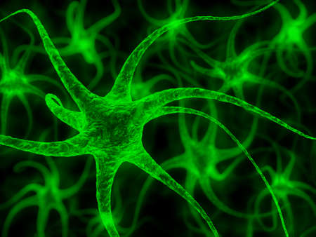 nerve: Neuron - nerve cell illustration