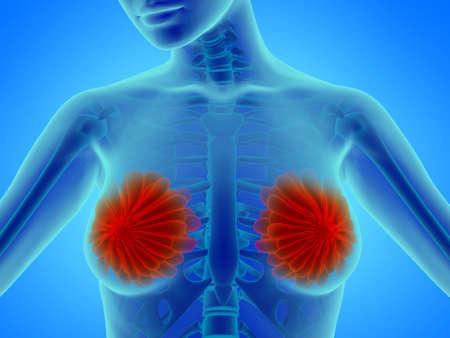 Woman breast with mammary gland - anatomy illustration Stock Photo