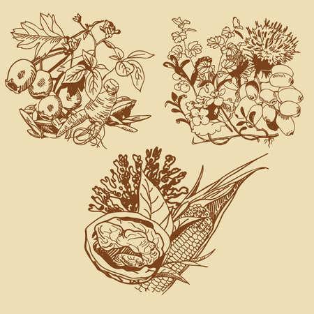 medicinal plants in the vector