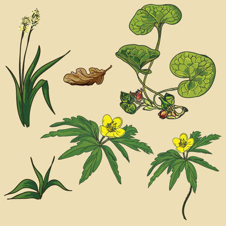 plantain: plants and flowers in the vector
