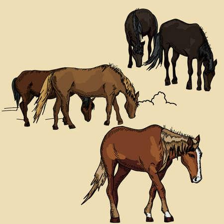 Horse vector  Illustration