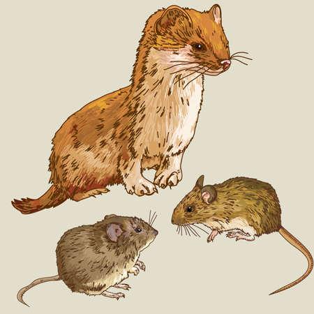 Illustration of the animals Mice