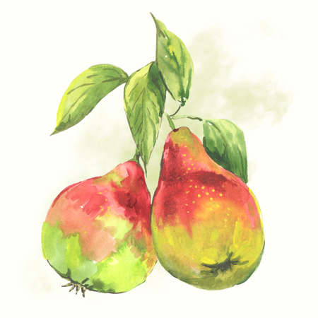 pear tree: Watercolor pears