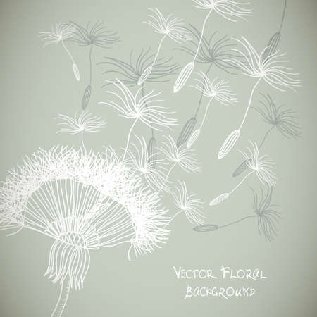 overblown: Overblown dandelion  background Illustration