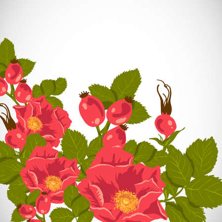 camellia: Floral background with wild rose, brier