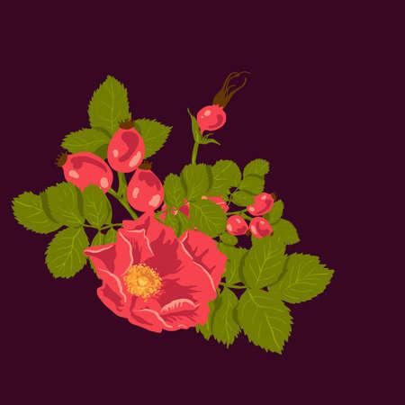 Sfondo floreale con rosa selvatica