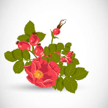 hagebutten: Floral Hintergrund mit wilden Rose Illustration