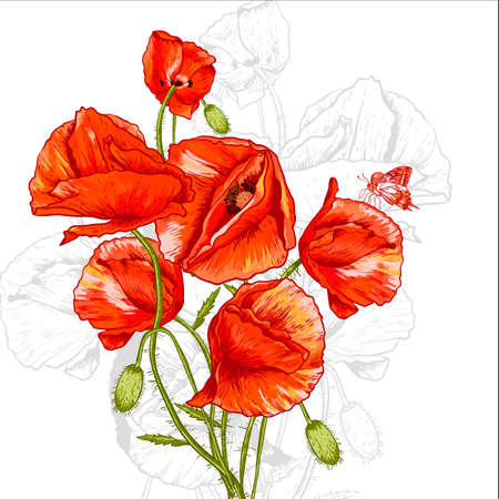 Bunch of Beautiful Red Poppy vector illustration Vintage Invitation Floral Card Design with Poppy. Vector