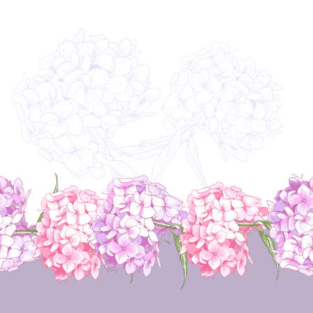 Beautiful Pink Hydrangea Vintage Seamless Floral Border Botanical Vector Illustration Vector