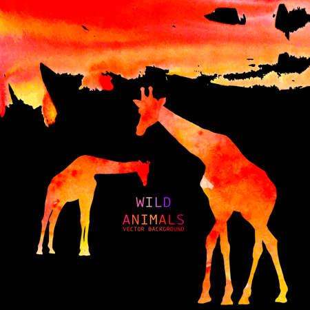 giraffa: Antecedentes Jirafa Acuarela del animal
