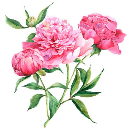 Pink peonies botanical watercolor illustration Foto de archivo