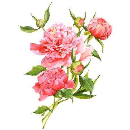 ramos de flores: Peon�as rosadas acuarela tarjeta de felicitaci�n de la vendimia Foto de archivo