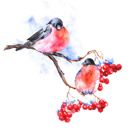 bullfinch: Winter Watercolor background with bullfinches