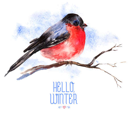 christmas robin: Winter Watercolor Background with Bullfinches