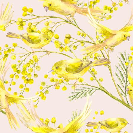 mimosa: Seamless Pattern with Sprig of Mimosa, Yellow Bird Stock Photo