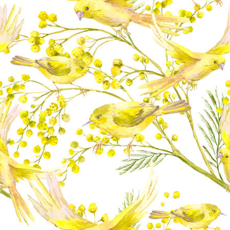 mimosa: Seamless Pattern with Sprig of Mimosa, Yellow Bird Stock Photo